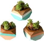 Geometric Mini Planters