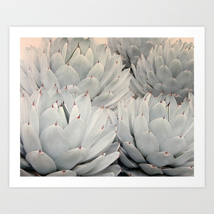 succulent-blush-prints