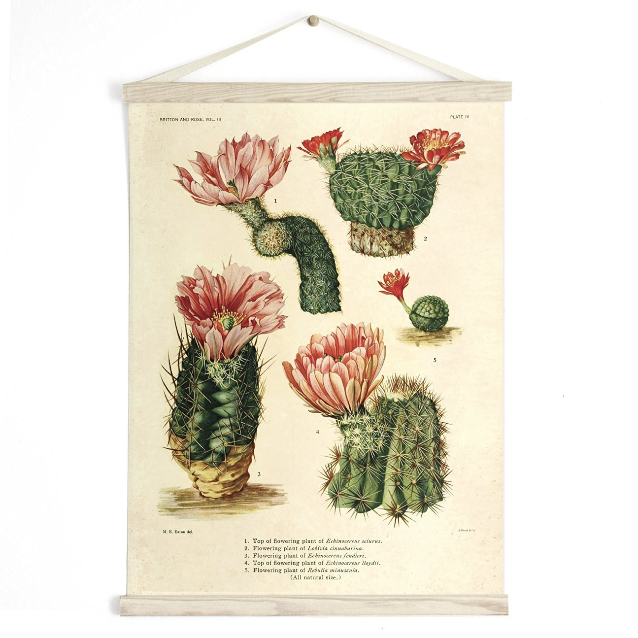 vintage botanical illustrations
