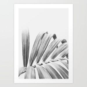 palm-bd0-prints