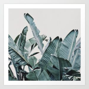 plumage-0bm-prints