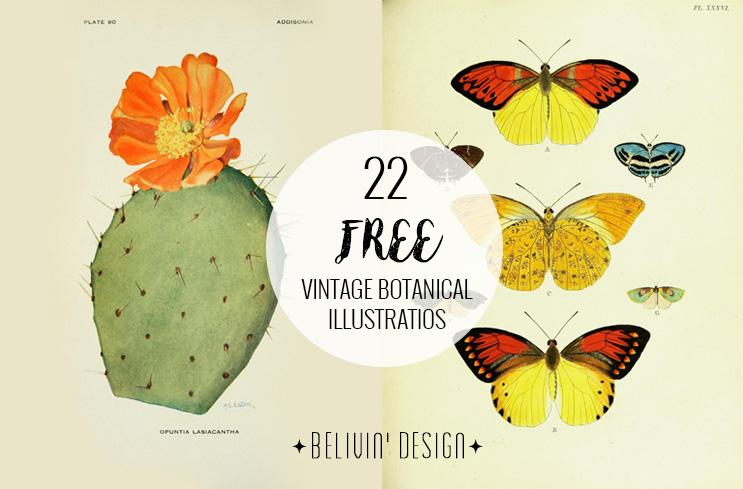 vintage botanical illustrations free download