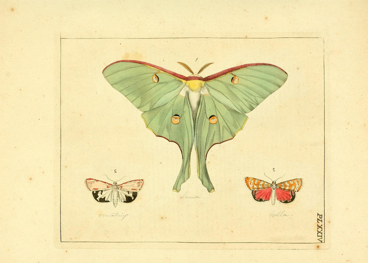 vintage_butterfly_illustrations