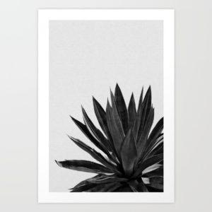 agave-cactus-black-white-k29-prints