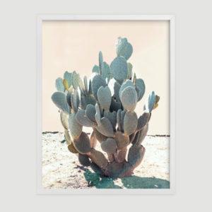 blue_cactus