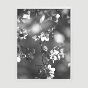 vintage_blossoms