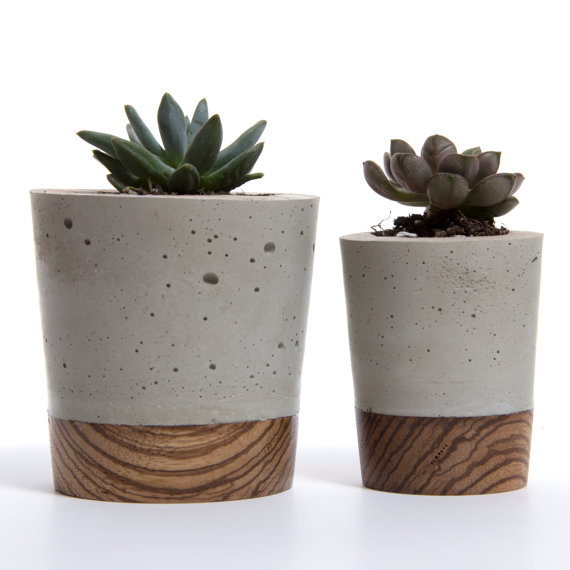 Mini Concrete Planters : Mini concrete planter zebra wood base by wasatch