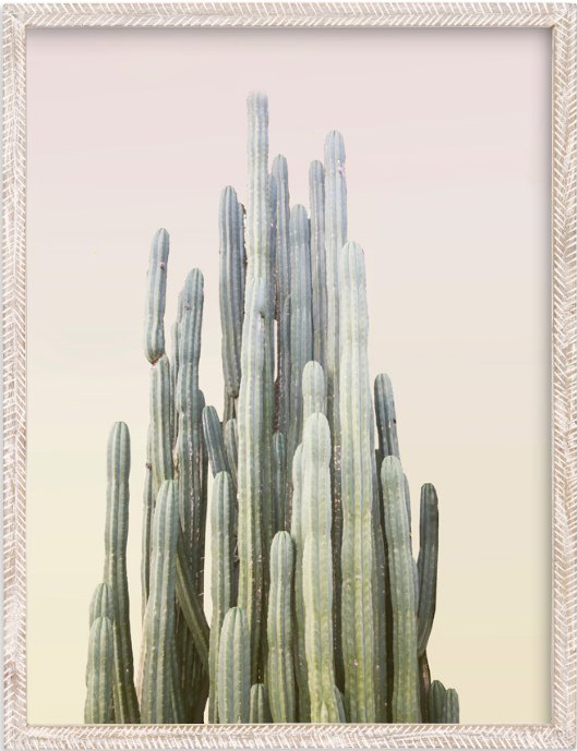 summer-yellow-cactus